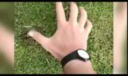 Got a mole problem on your golf course?